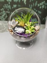 Glass globe sitting Succulent March 3